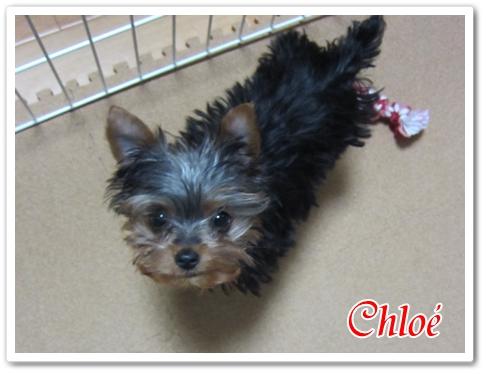Chloe03