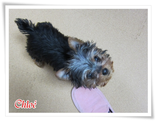 Chloe_2